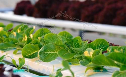 Nutrimenti nella Coltivazione Idroponica