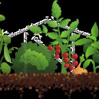 Speciale Outdoor – Consigli sulla coltivazione all'aperto