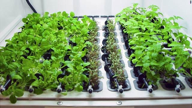 Idroponica in casa per erbe aromatiche e da cucina