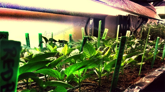 Guida Coltivazione Indoor