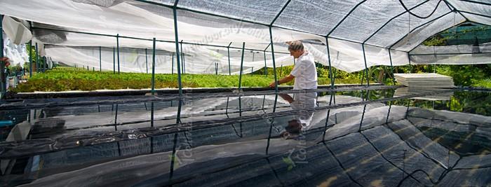 Bioponica: La coltivazione idroponica biologica