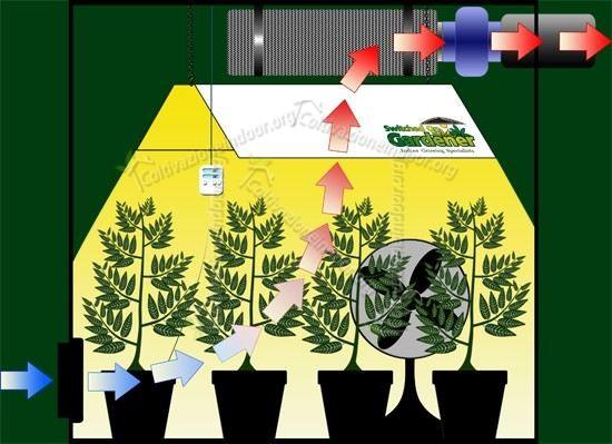 L'aria nella grow room è importante per le piante